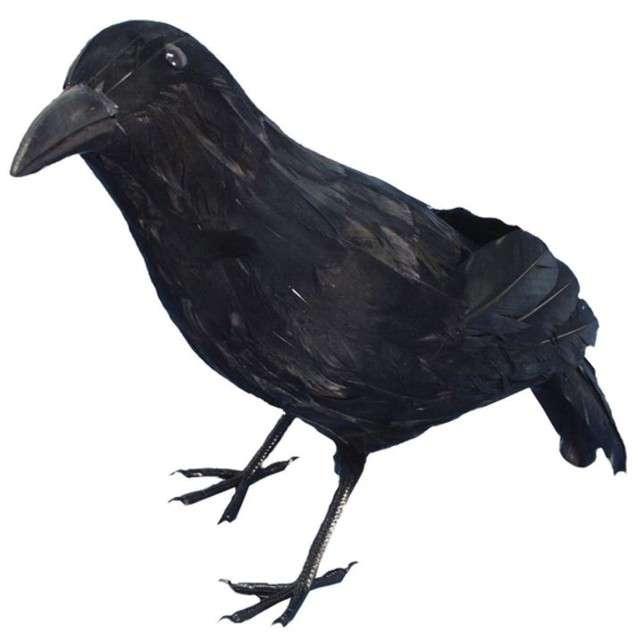 _xx_Crow Black