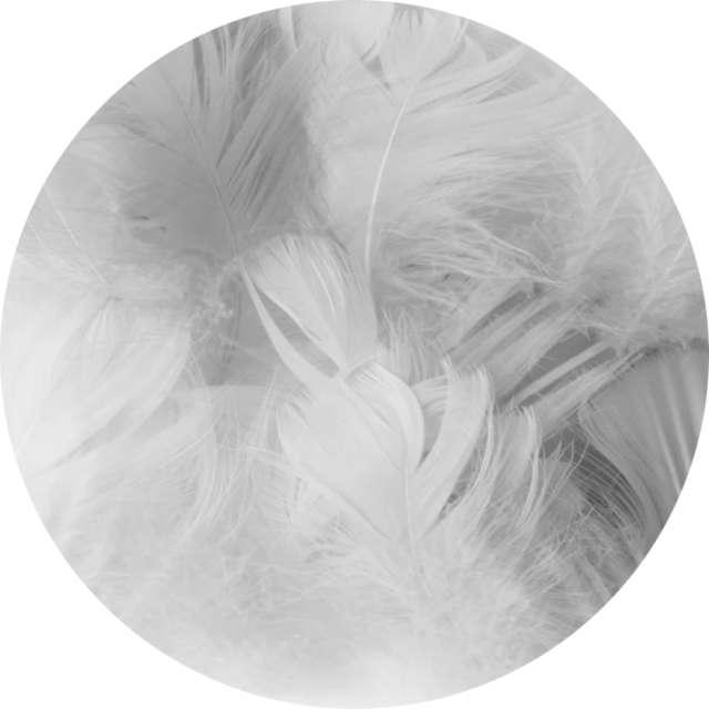 Piórka dekoracyjne Krótkie szare PartyPal 5-8 cm 50 szt