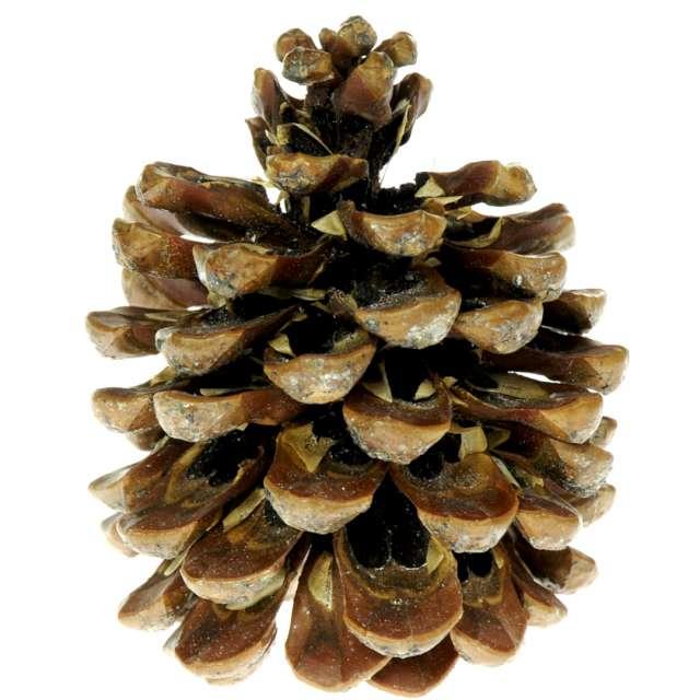 Dekoracja Szyszki - pinus pinea Aliga 3 szt
